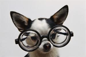 szemüveges_kutya