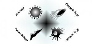vírusok_baktériumok_gombák