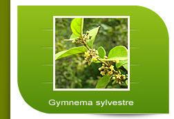 gymnema-sylvestre